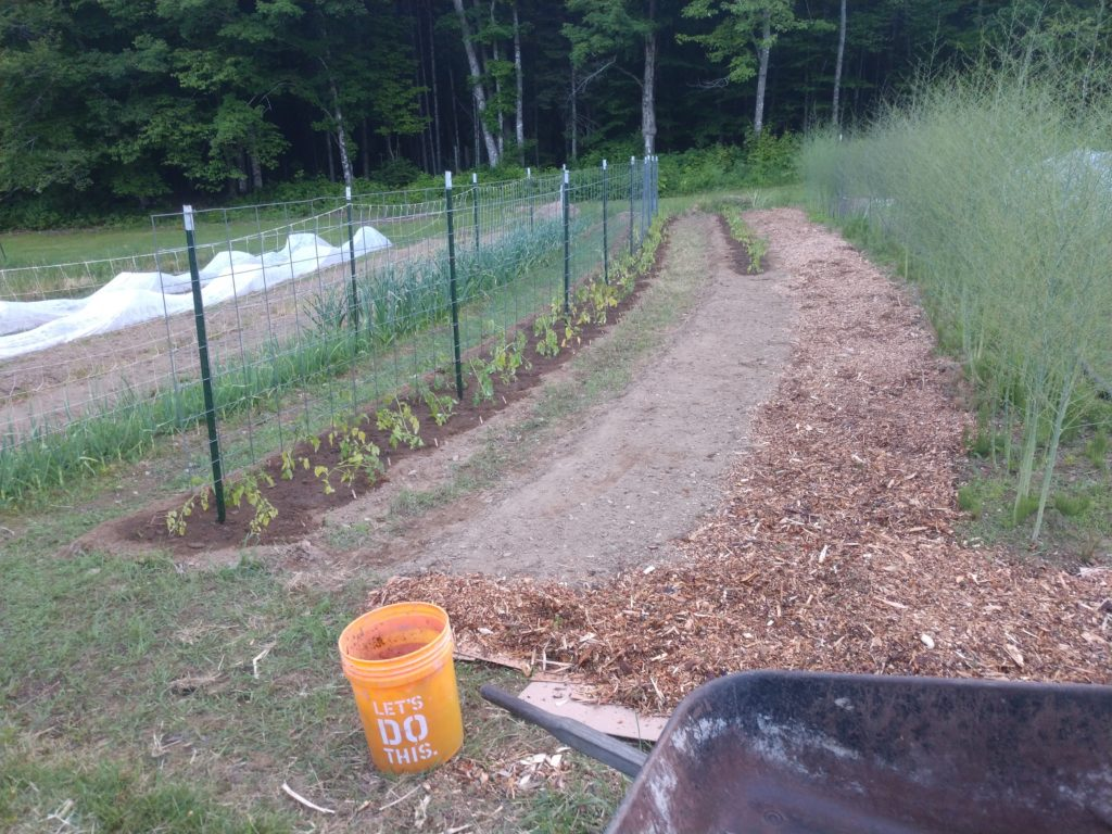 Adding cardboard and woodchips to the garden paths for weed suppression.
