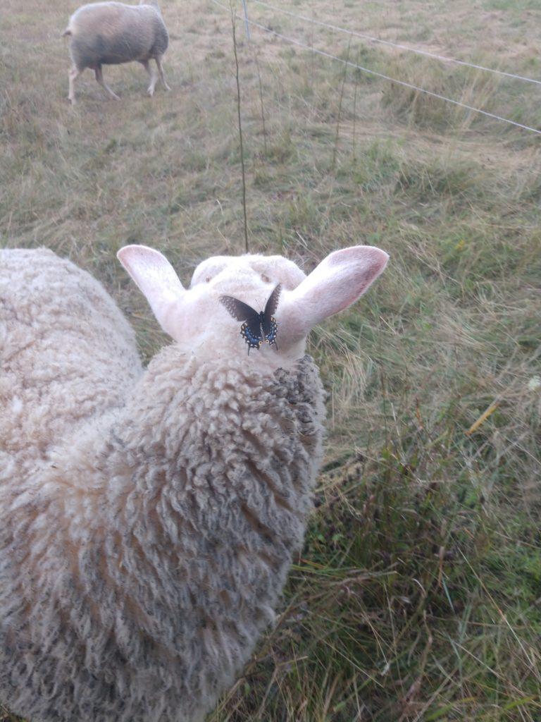 Poppy made a friend